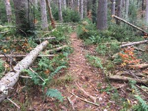 Photo showing trail work to clear fallen trees from the Mahican Mohawk Trail